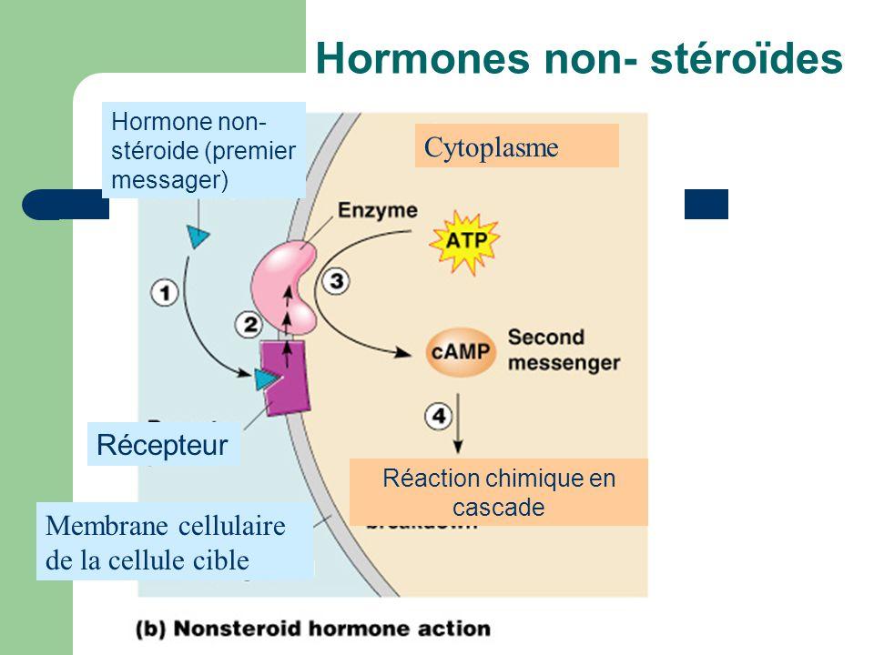 Hormones non- stéroïdes