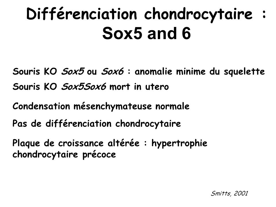 Différenciation chondrocytaire : Sox5 and 6