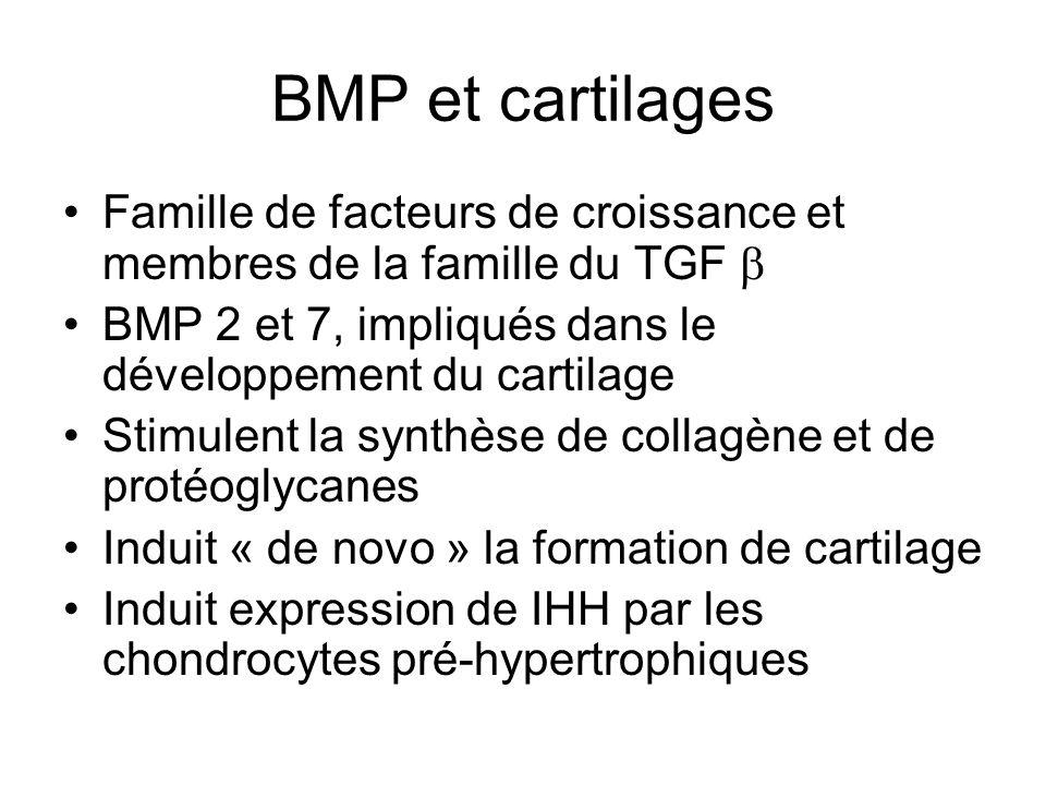 BMP et cartilages Famille de facteurs de croissance et membres de la famille du TGF b. BMP 2 et 7, impliqués dans le développement du cartilage.