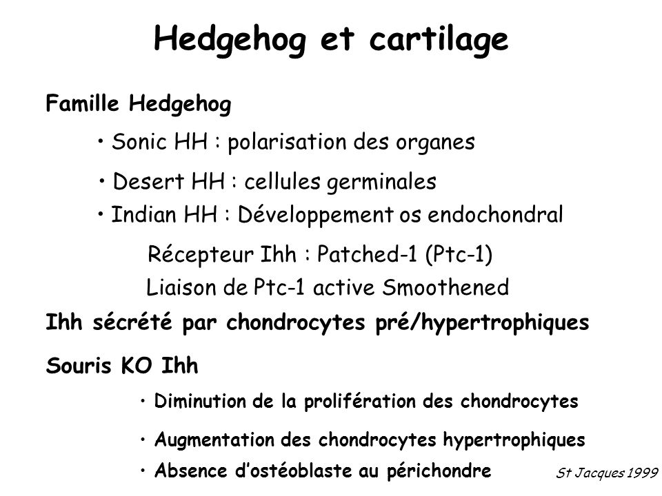 Hedgehog et cartilage Famille Hedgehog