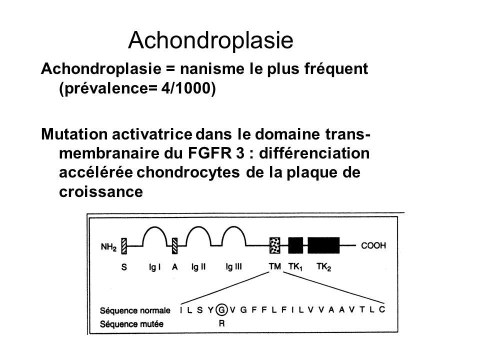 Achondroplasie Achondroplasie = nanisme le plus fréquent (prévalence= 4/1000)