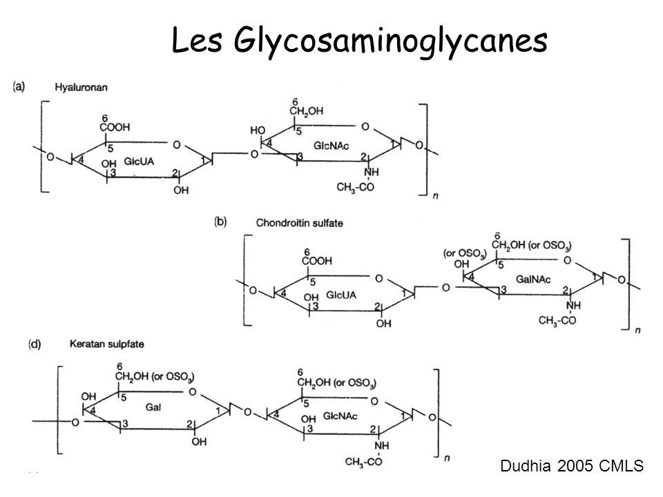 Les Glycosaminoglycanes
