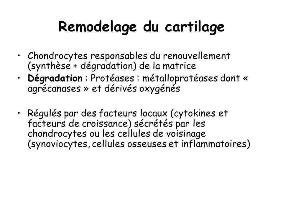 Remodelage du cartilage