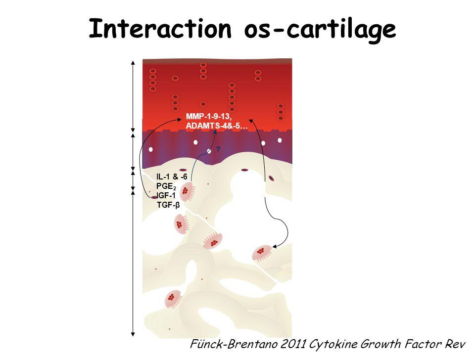 Interaction os-cartilage