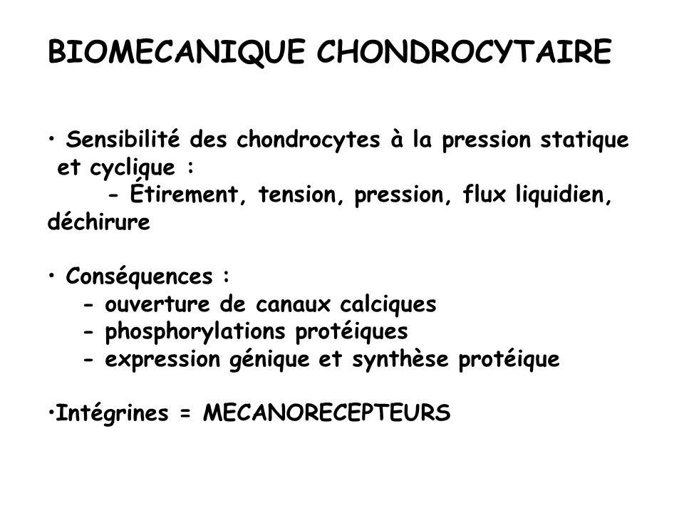 BIOMECANIQUE CHONDROCYTAIRE