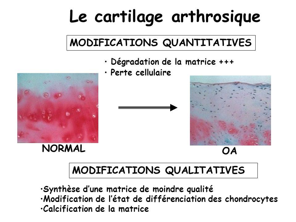 Le cartilage arthrosique