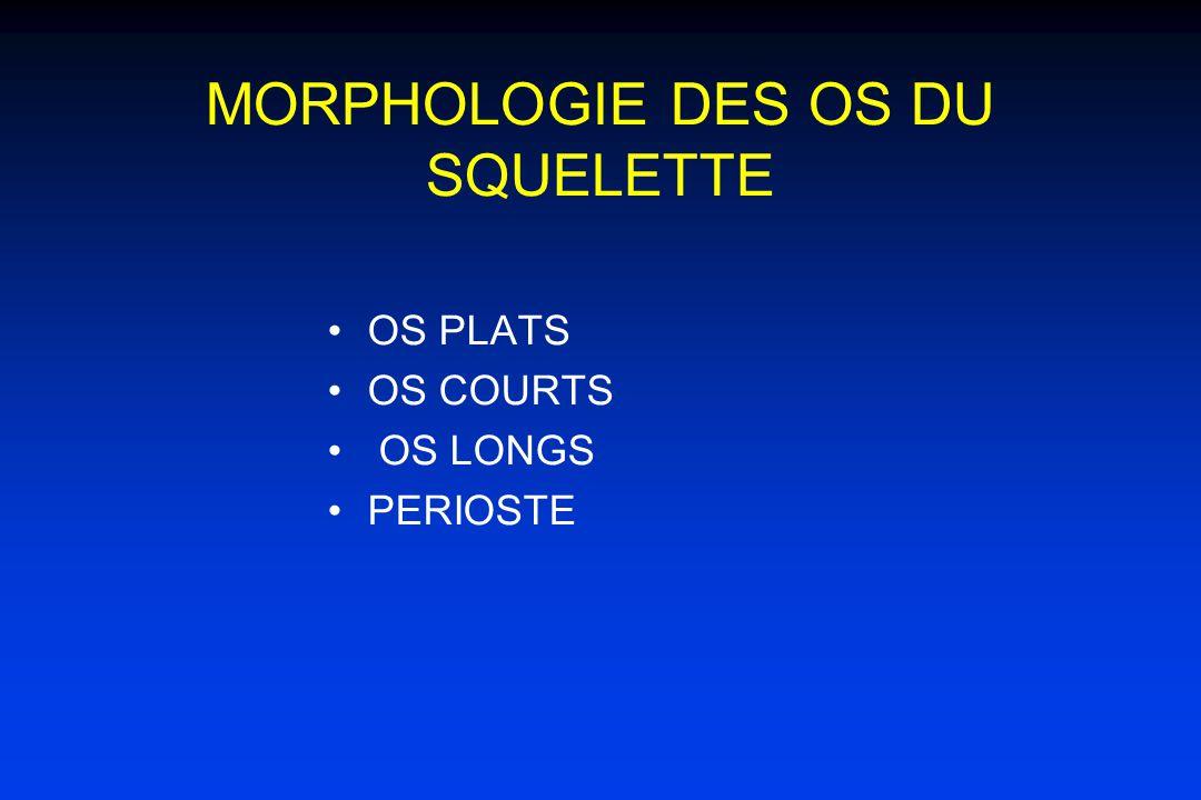 MORPHOLOGIE DES OS DU SQUELETTE