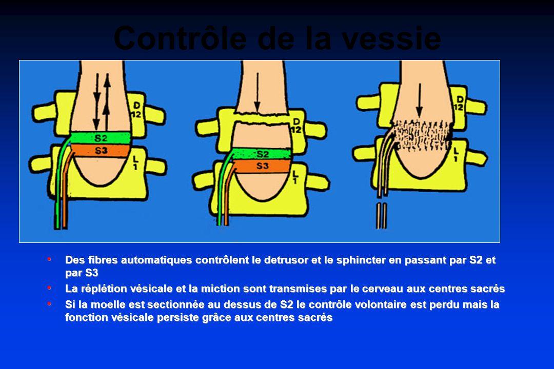 Contrôle de la vessie Des fibres automatiques contrôlent le detrusor et le sphincter en passant par S2 et par S3.