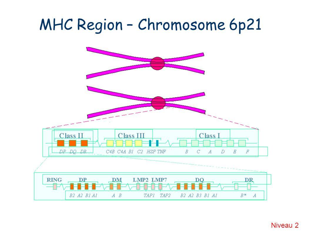 MHC Region – Chromosome 6p21