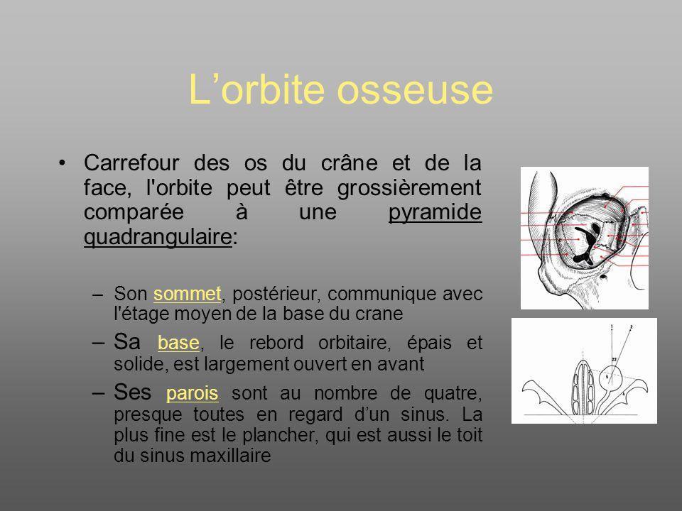 L'orbite osseuse Carrefour des os du crâne et de la face, l orbite peut être grossièrement comparée à une pyramide quadrangulaire:
