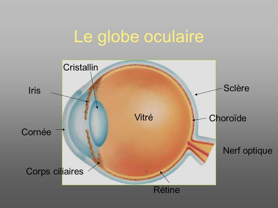 Le globe oculaire Cristallin Sclère Iris Vitré Choroïde Cornée