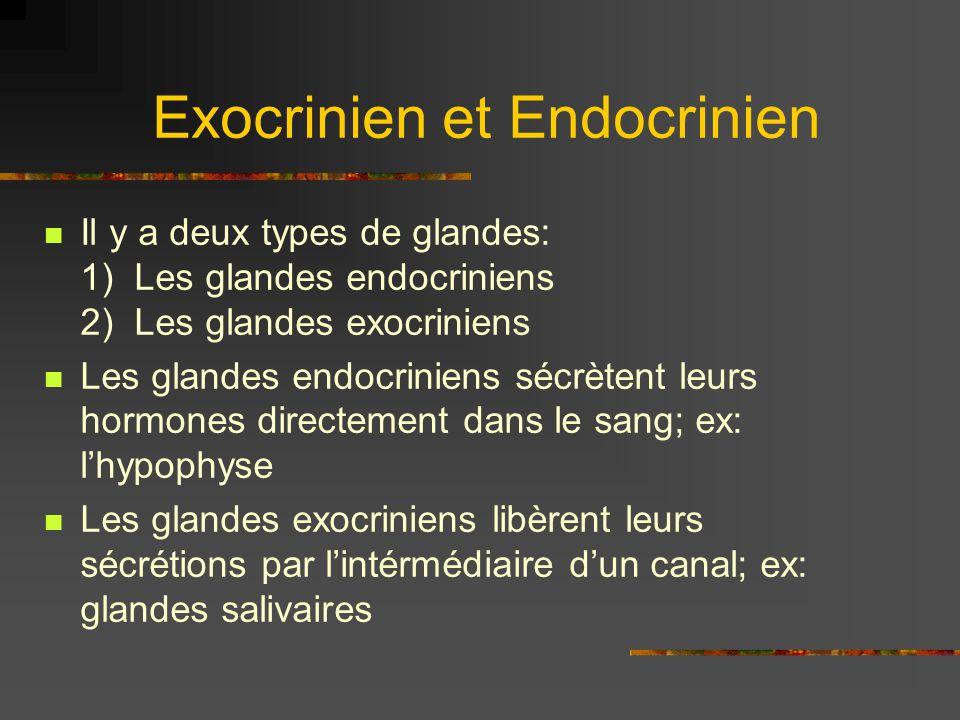 Exocrinien et Endocrinien
