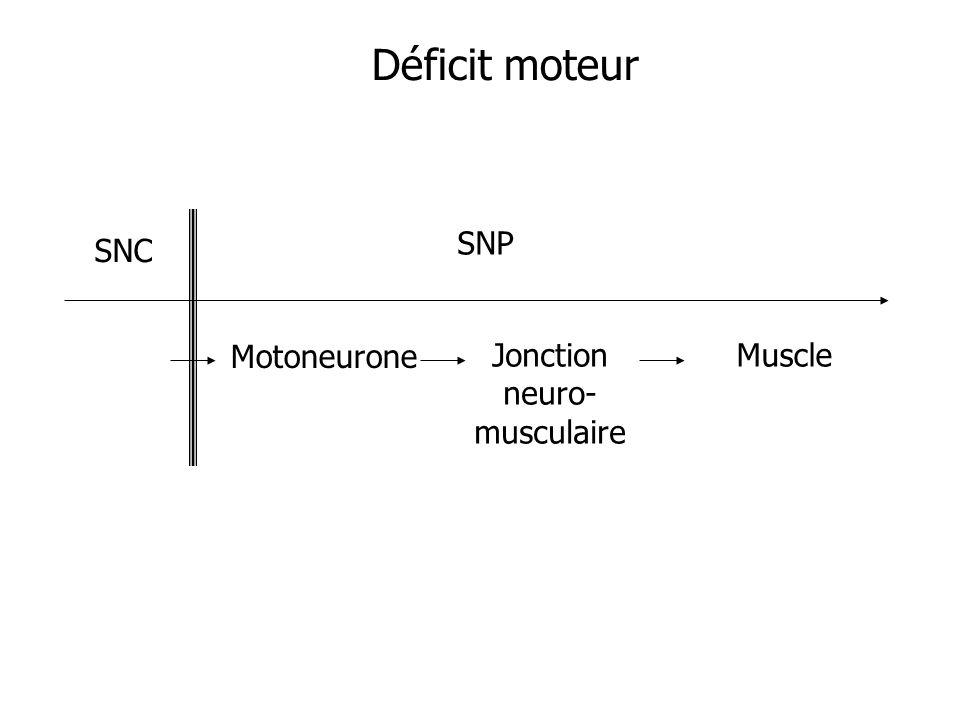 Déficit moteur SNC SNP Motoneurone Jonction neuro-musculaire Muscle