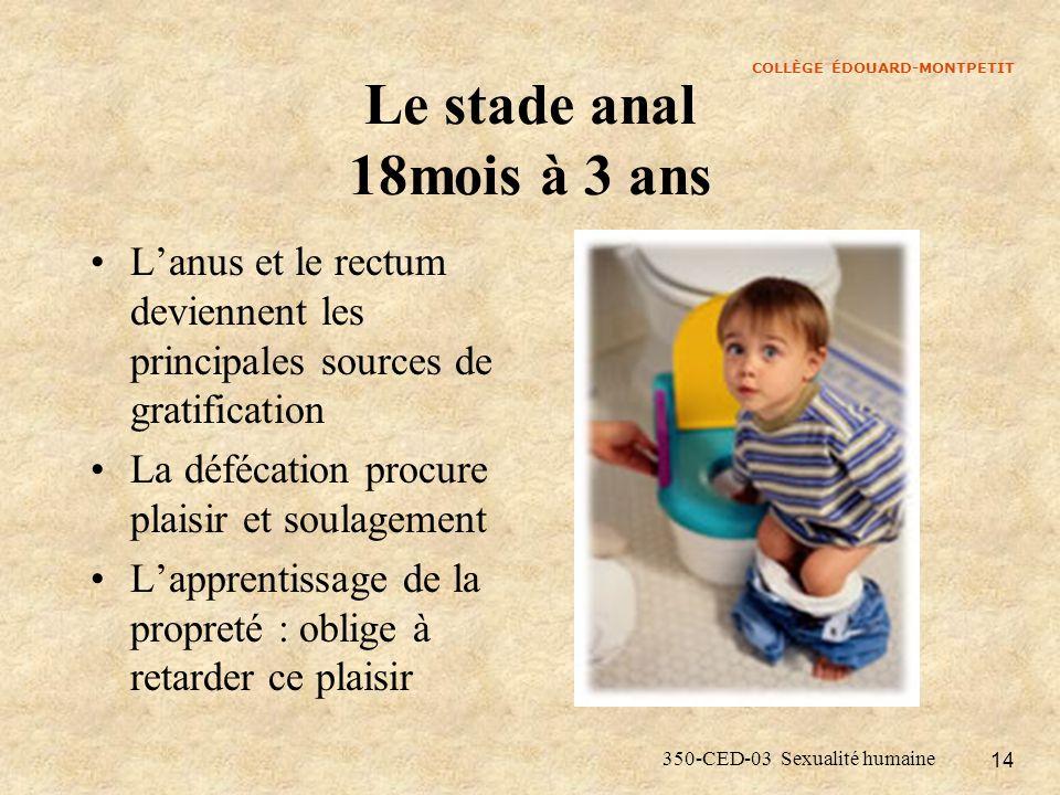 Le stade anal 18mois à 3 ans L'anus et le rectum deviennent les principales sources de gratification.