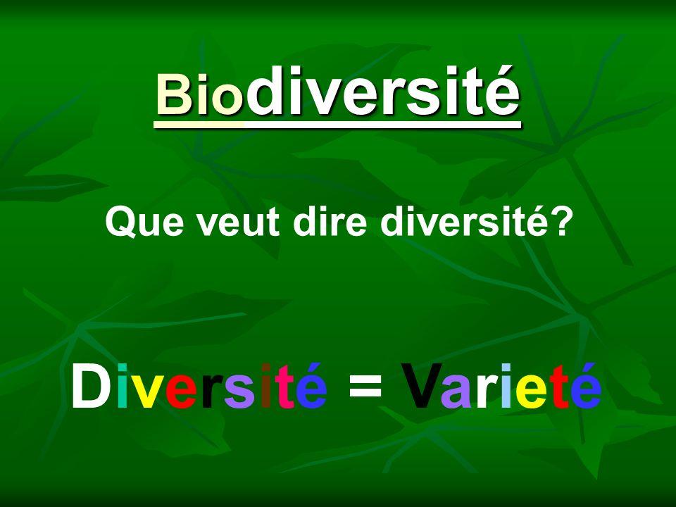 Que veut dire diversité