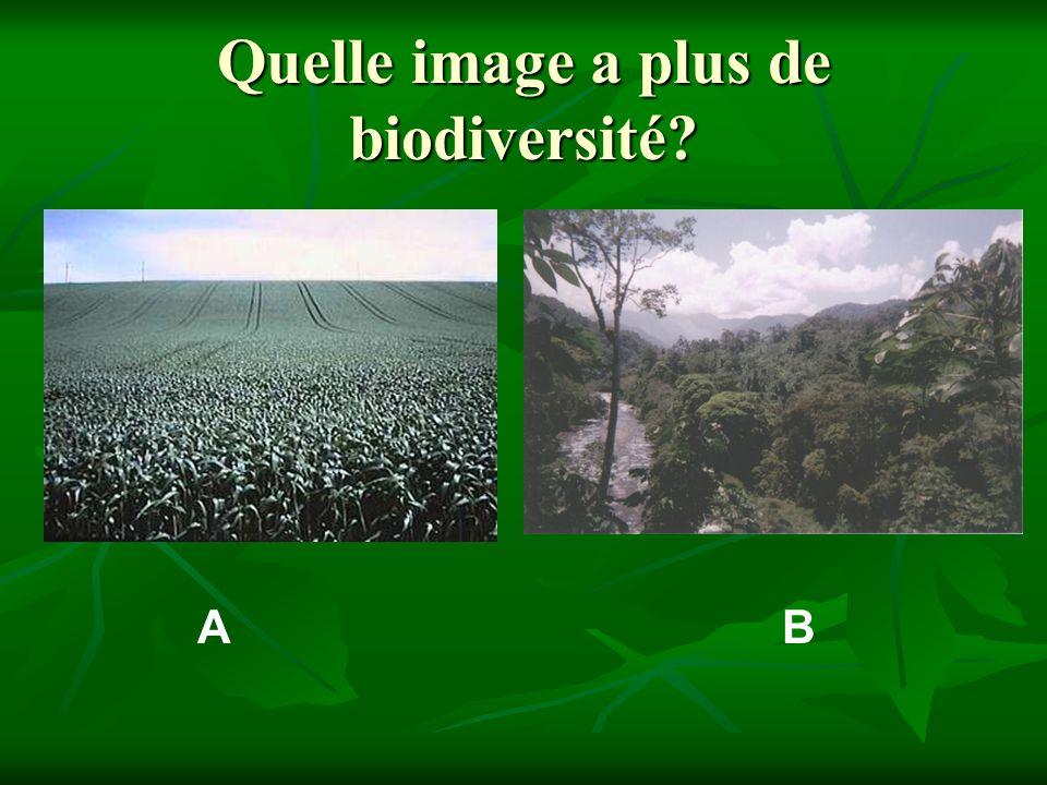 Quelle image a plus de biodiversité