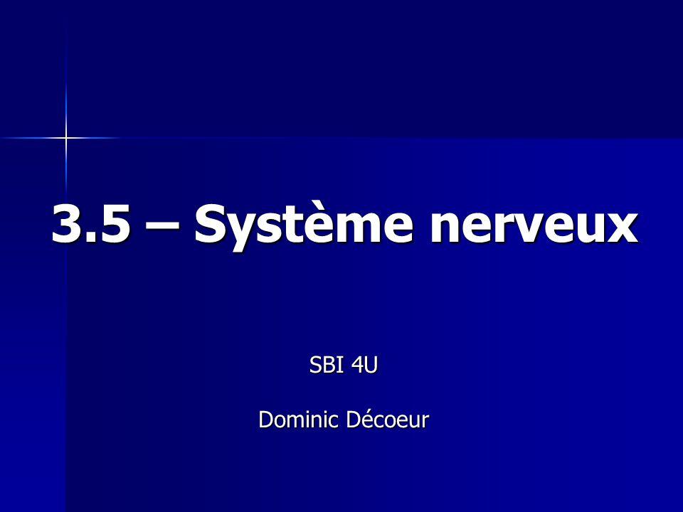 3.5 – Système nerveux SBI 4U Dominic Décoeur