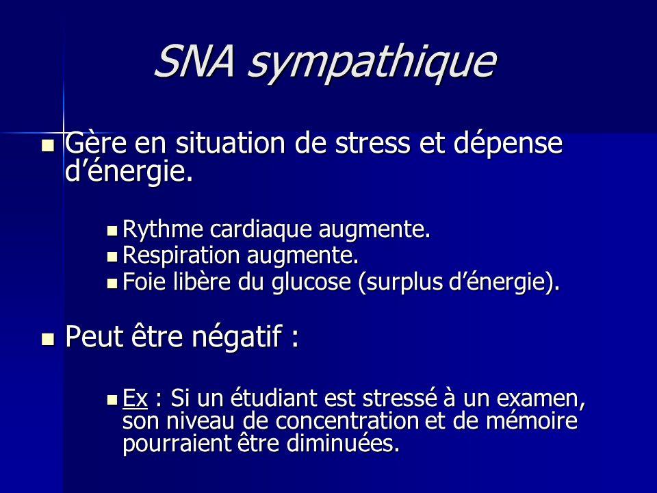 SNA sympathique Gère en situation de stress et dépense d'énergie.