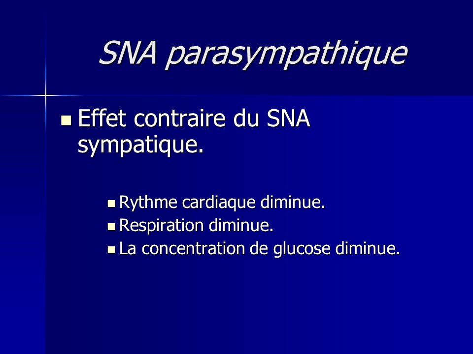 SNA parasympathique Effet contraire du SNA sympatique.