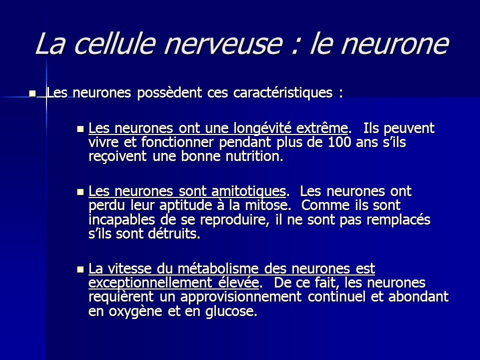 La cellule nerveuse : le neurone