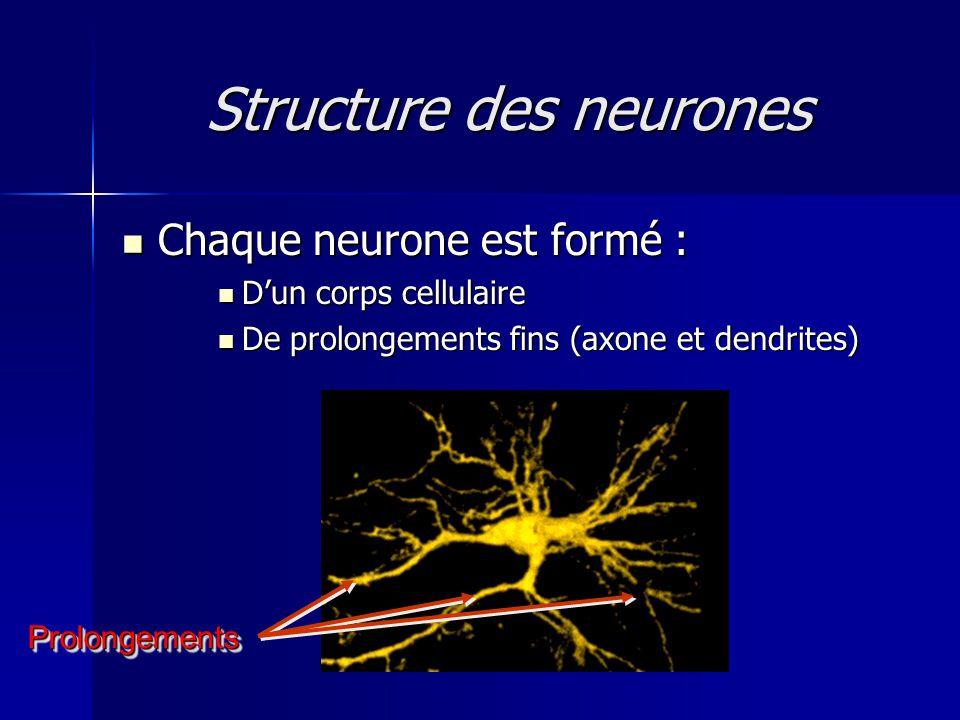 Structure des neurones