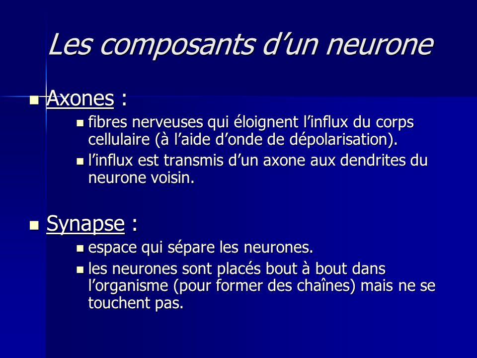 Les composants d'un neurone