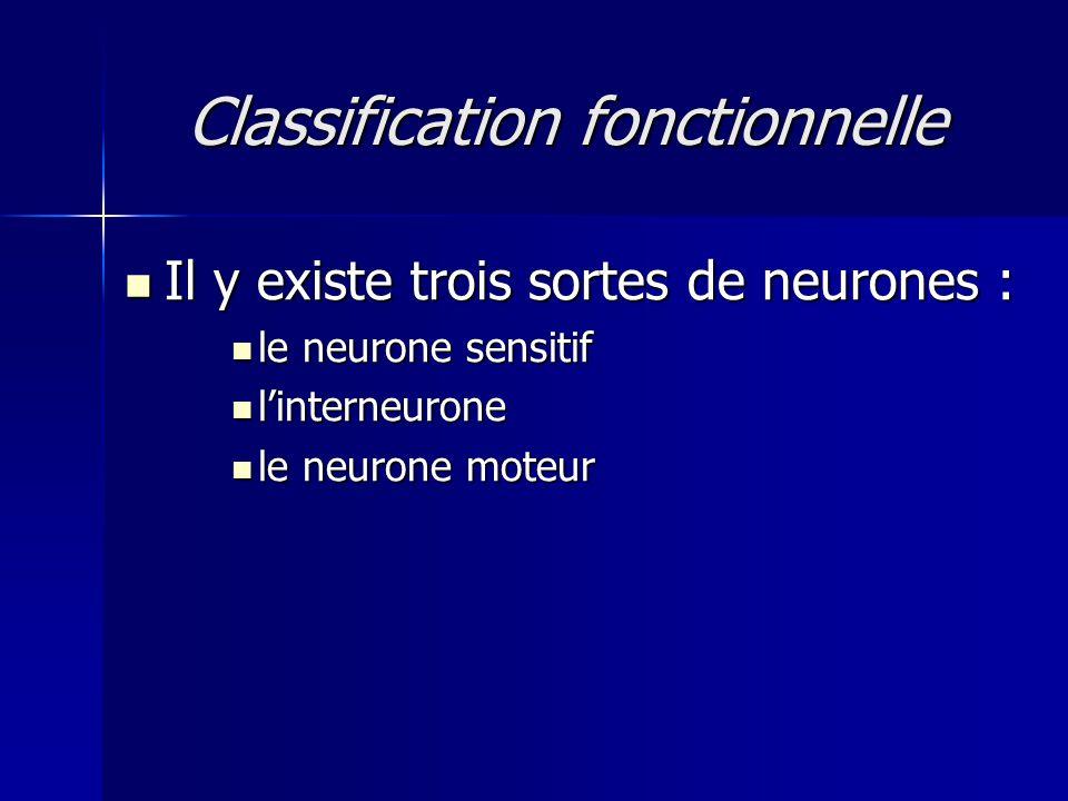 Classification fonctionnelle