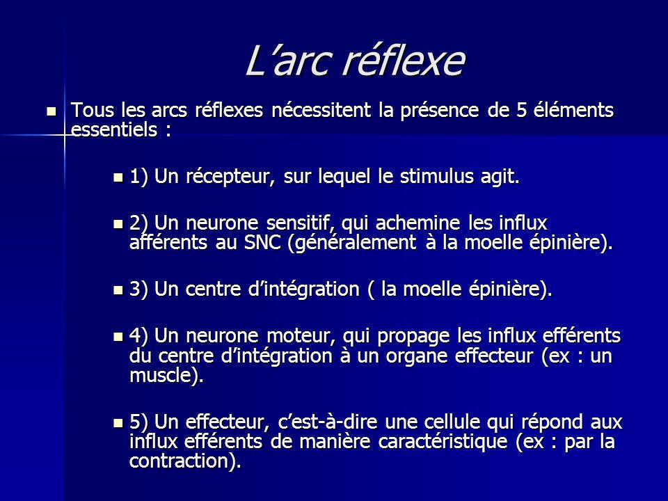 L'arc réflexe Tous les arcs réflexes nécessitent la présence de 5 éléments essentiels : 1) Un récepteur, sur lequel le stimulus agit.