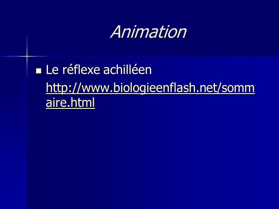 Animation Le réflexe achilléen