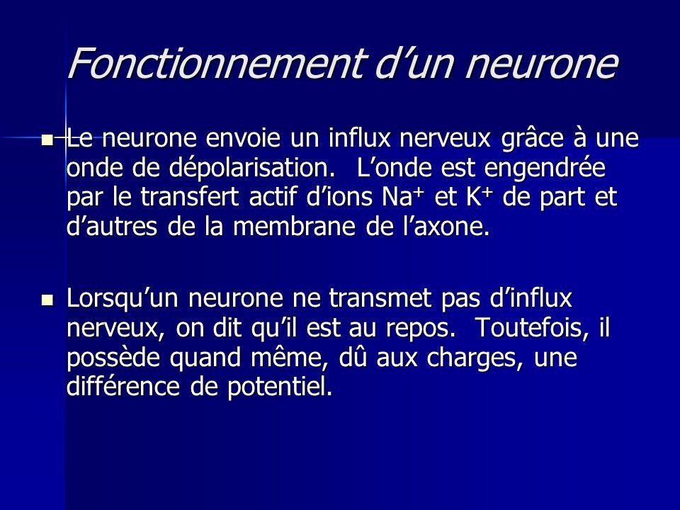 Fonctionnement d'un neurone