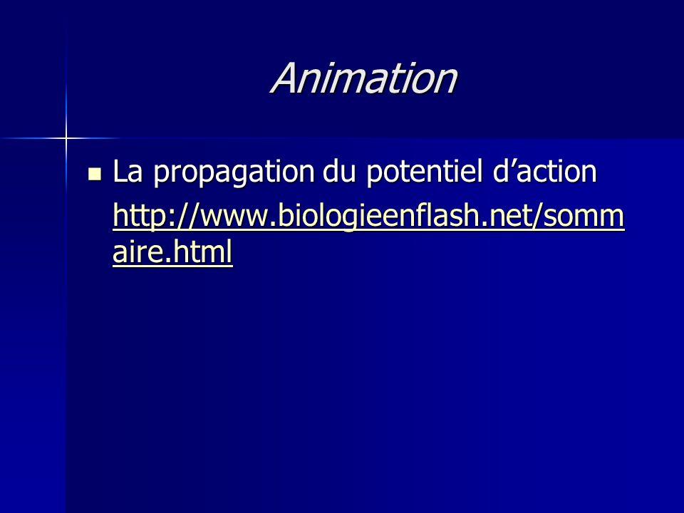 Animation La propagation du potentiel d'action