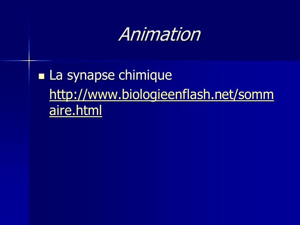 Animation La synapse chimique