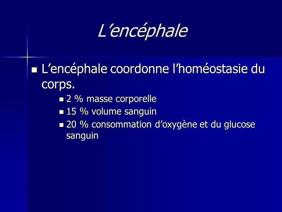 L'encéphale L'encéphale coordonne l'homéostasie du corps.