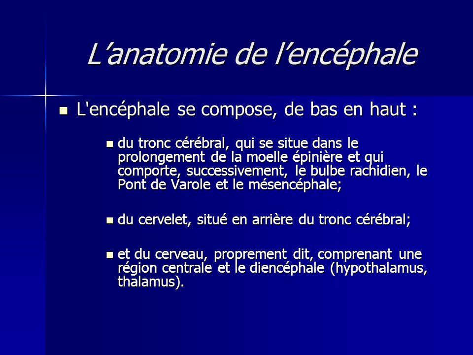 L'anatomie de l'encéphale