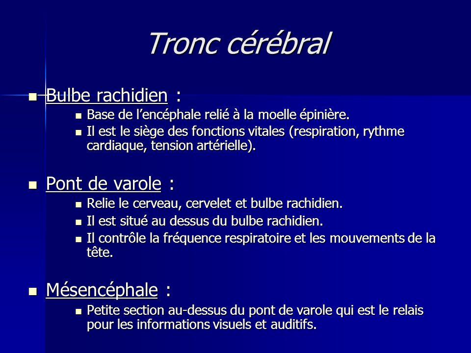 Tronc cérébral Bulbe rachidien : Pont de varole : Mésencéphale :