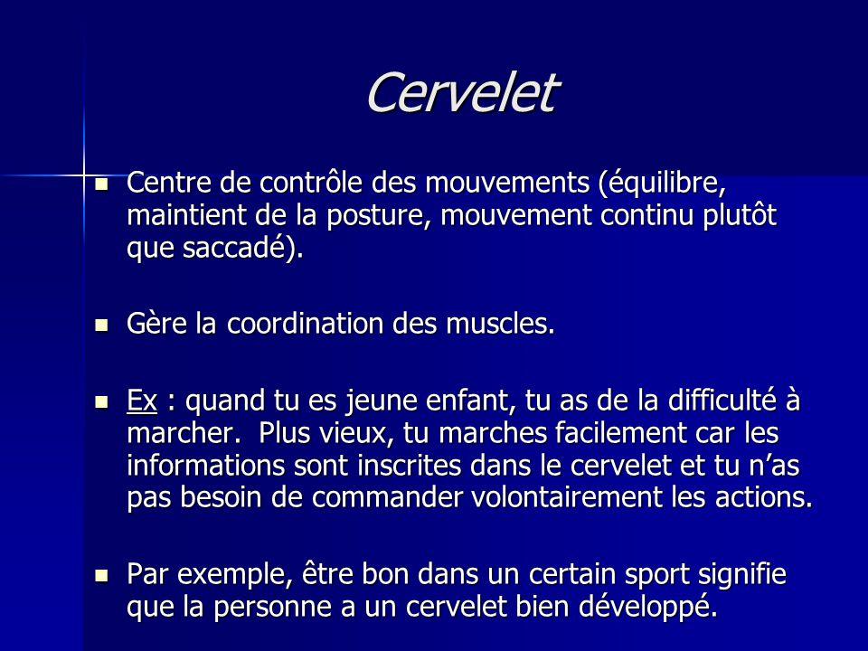 Cervelet Centre de contrôle des mouvements (équilibre, maintient de la posture, mouvement continu plutôt que saccadé).