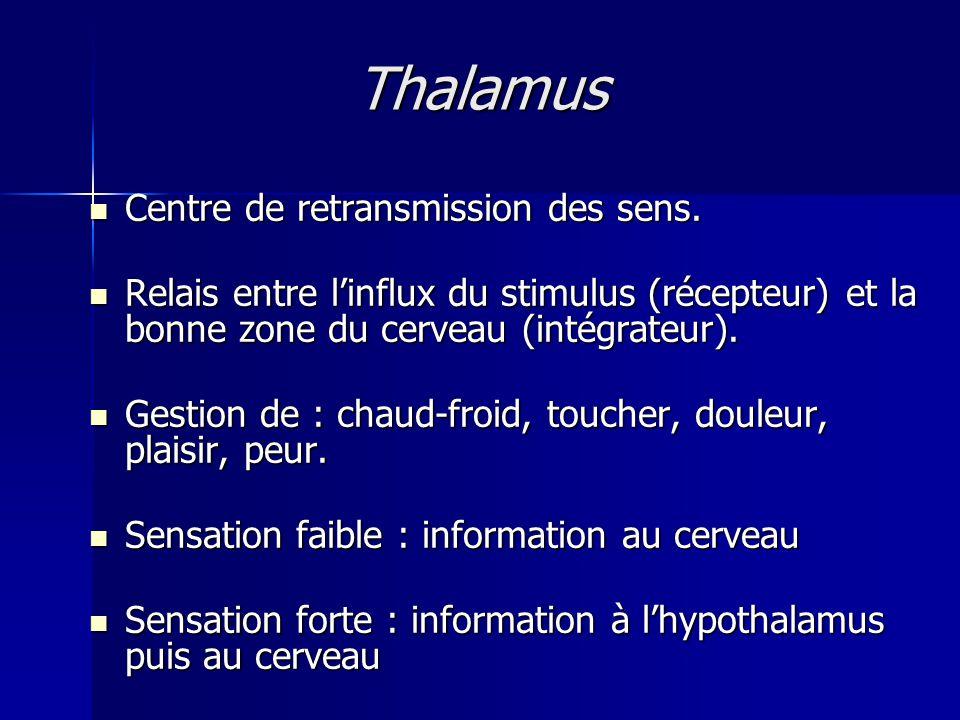 Thalamus Centre de retransmission des sens.