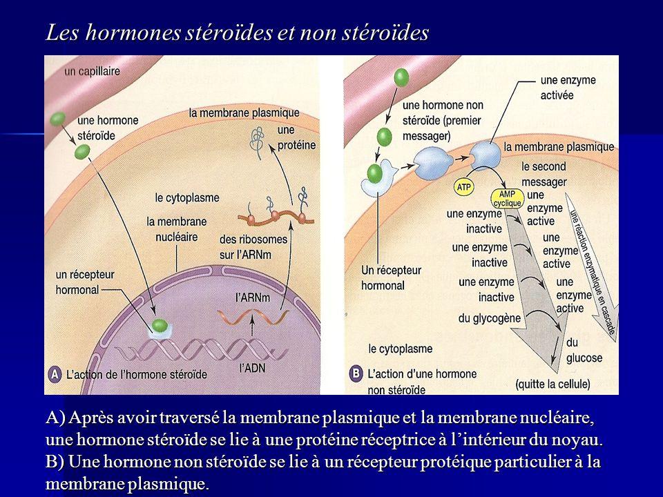 Les hormones stéroïdes et non stéroïdes