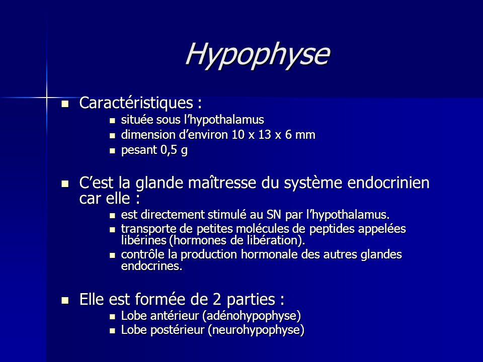Hypophyse Caractéristiques :