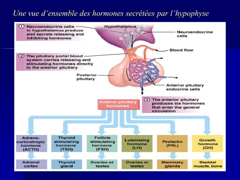 Une vue d'ensemble des hormones secrétées par l'hypophyse