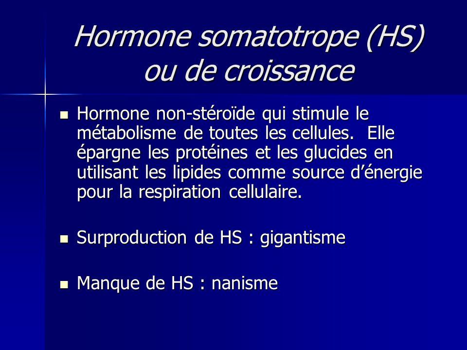 Hormone somatotrope (HS) ou de croissance
