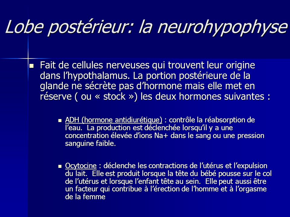 Lobe postérieur: la neurohypophyse