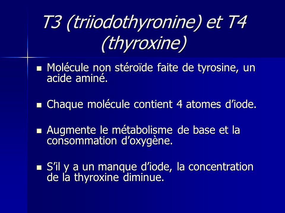 T3 (triiodothyronine) et T4 (thyroxine)