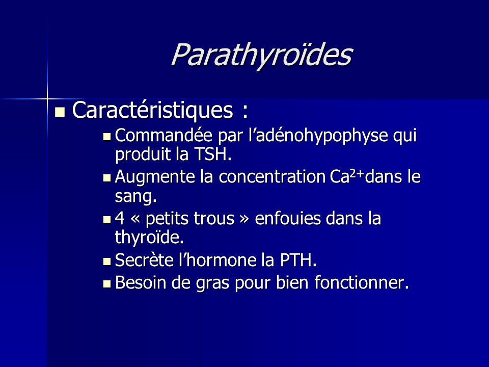 Parathyroïdes Caractéristiques :