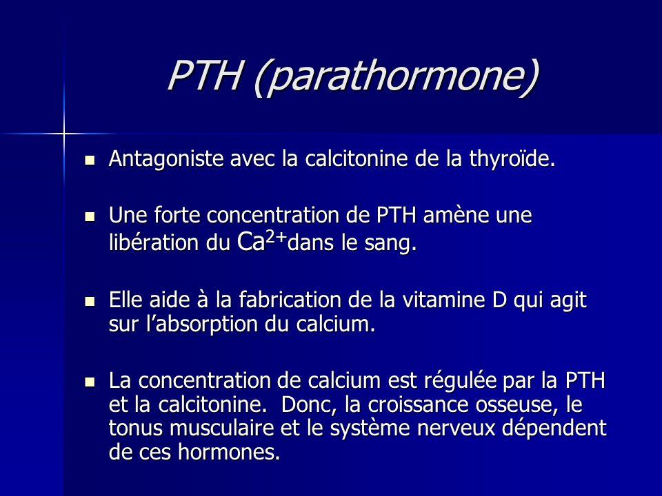 PTH (parathormone) Antagoniste avec la calcitonine de la thyroïde.