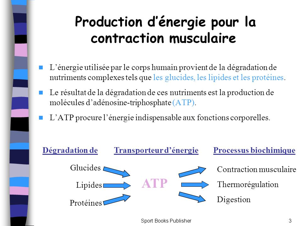 Production d'énergie pour la contraction musculaire