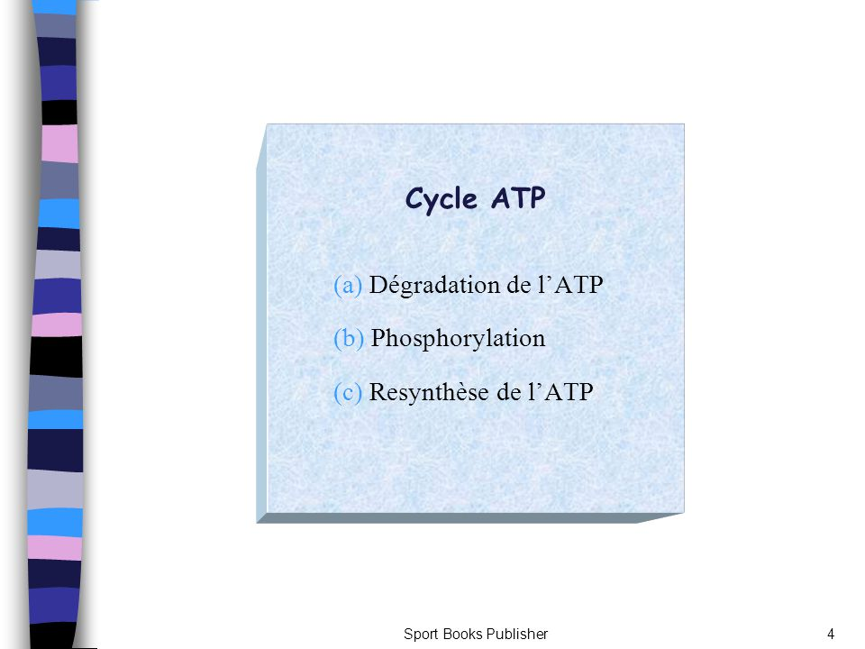 Cycle ATP (a) Dégradation de l'ATP (b) Phosphorylation