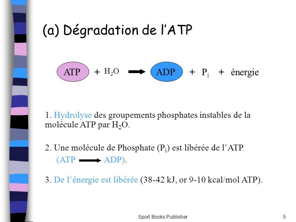 (a) Dégradation de l'ATP