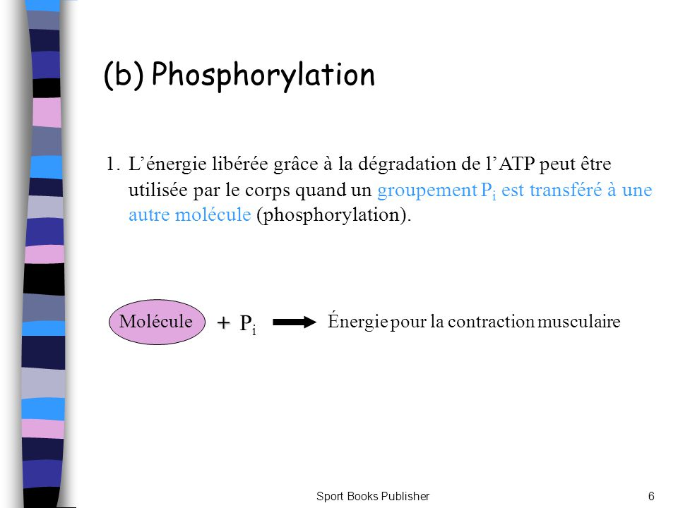 (b) Phosphorylation