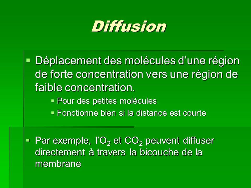 Diffusion Déplacement des molécules d'une région de forte concentration vers une région de faible concentration.